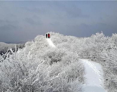 """渭北高原上的""""西双版纳""""雪景迷人"""