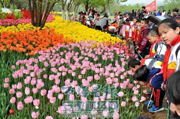 众多市民学生幼儿园小朋友前往合肥植物园赏花