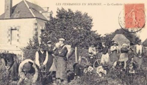 老照片中的法国葡萄酒历史 图图片