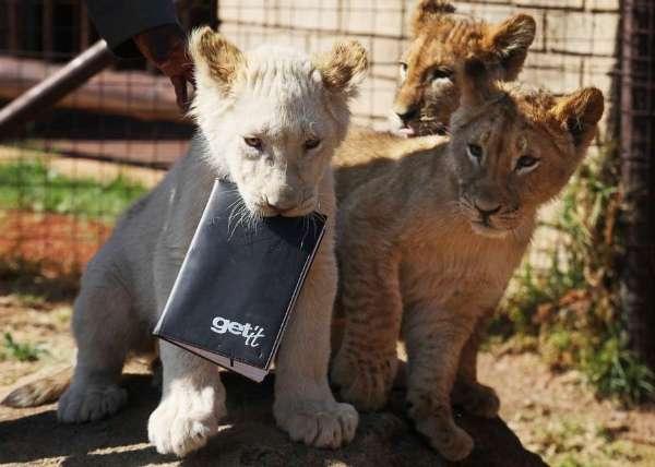 """世界各地可爱动物:""""萌""""是一种动物天性"""