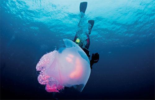 种类繁多的海洋生物