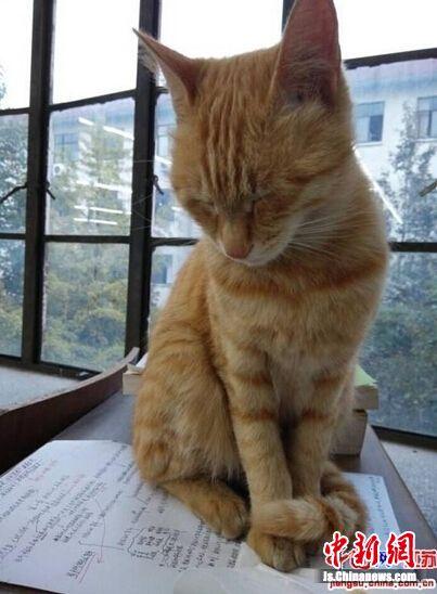 """扬州大学""""学霸猫""""走红 每天到自习室""""陪读""""(图)"""