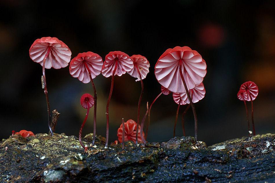 自然界中的菌类