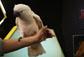 神鸟凤凤预测英格兰平乌拉圭