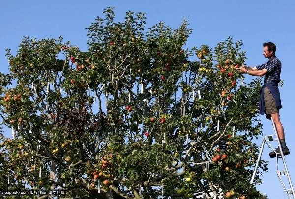英男子花21年培育神奇果树
