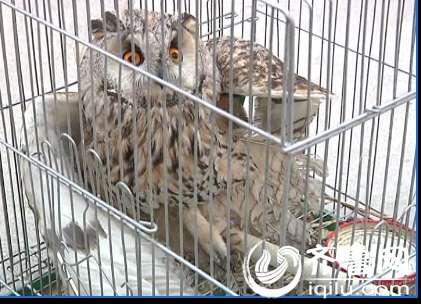 新闻资讯 城市 > 正文   邹城:国家二级保护动物受伤民警及时送其救治
