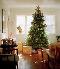 圣诞树下等待开启的礼物