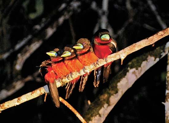 马来西亚沙巴探秘 夜晚在雨林里找动物