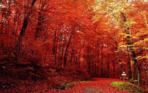 背景 壁纸 枫叶 红枫 绿色 绿叶 树 树叶 植物 桌面 500_313图片