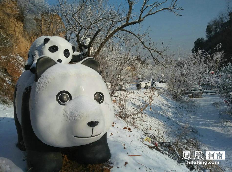0只憨态可爱的大熊猫