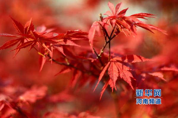红枫油画风景图片大全