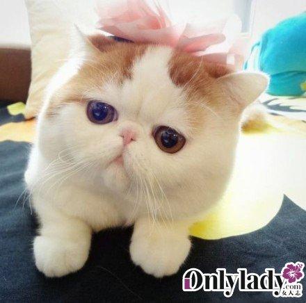 咖啡猫图片大全可爱