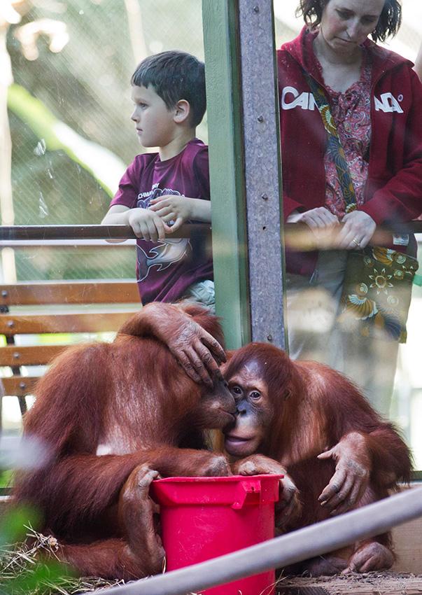 """动物园里的""""母亲节"""""""