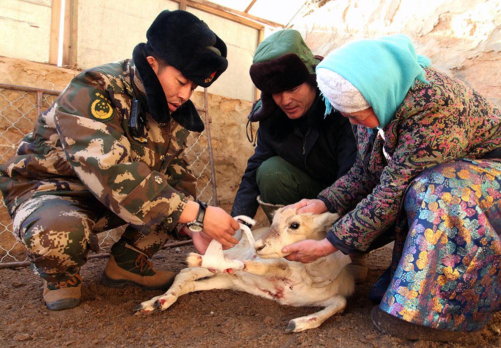 锡林郭勒:多警种巡逻保护野生动物