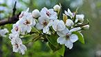 湖南春季赏花全攻略