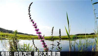 黑龙江大美湿地