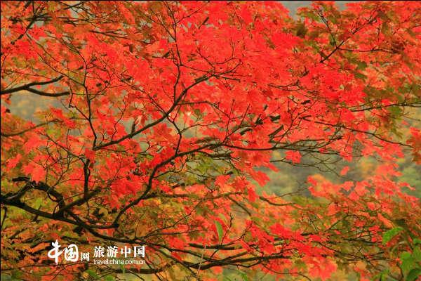 金秋十月 峨眉山最妖娆动人的季节
