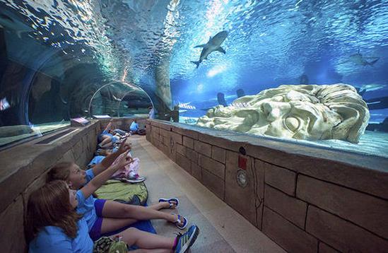 躺在海底世界里,看海龟和鲨鱼露出他们胖胖的肚皮,一大群热带鱼在你