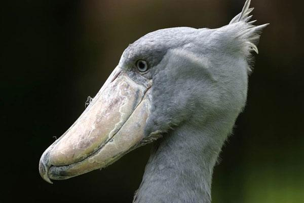 世界最怪的10种动物
