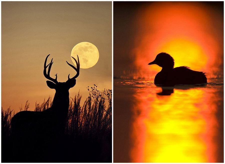 这些动物剪影与色彩斑斓的天空形成鲜明的对比,画面之唯美让人赞叹不