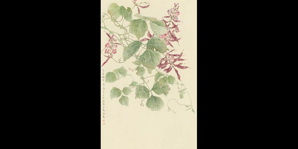 《大雪——紫扁豆》66cmx43cm-2011年