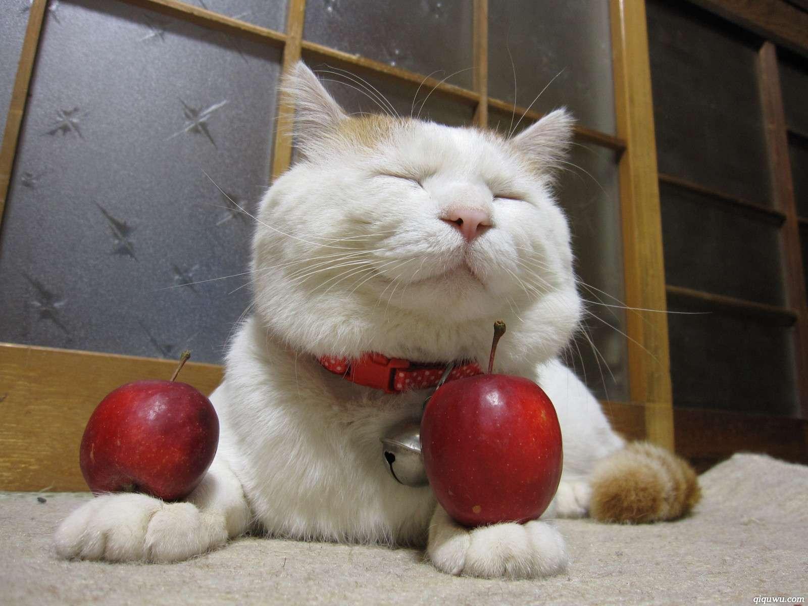 【苹果】坏了一点的苹果到底能不能吃