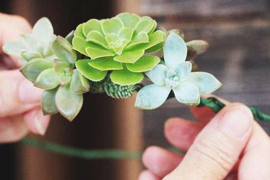 多肉的浪漫 巧手diy植物公主花环