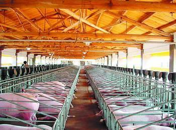 1月12日,记者从赣州出入境检验检疫局获悉,去年我市供港生猪出口总量