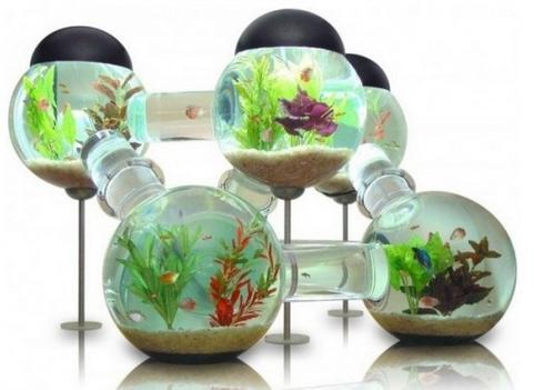 客厅鱼缸放鱼数量风水