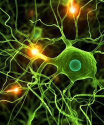 高温会影响人体神经系统