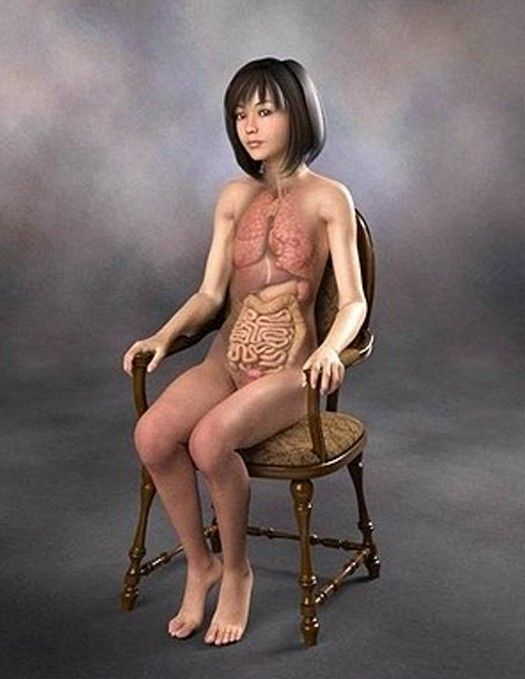日本少女裸体3d解剖图 竖
