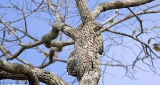 发现自然界的伪装大师;; 神奇动物世界伪装大师 你能看见他们在哪吗