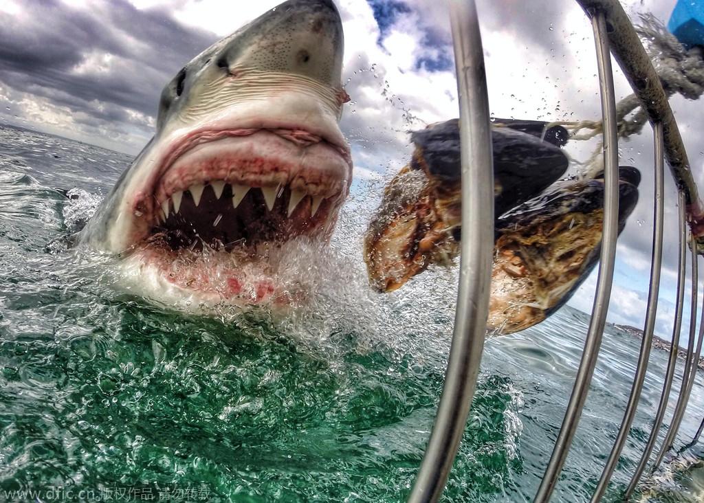 《时代周刊》2014年最佳动物照片