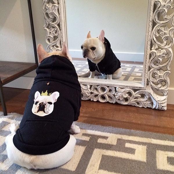 最 臭美 的明星萌犬
