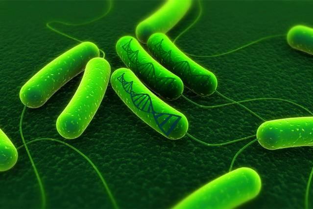 Геном картинки 3
