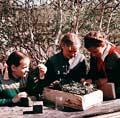 1950年代苏联小学生