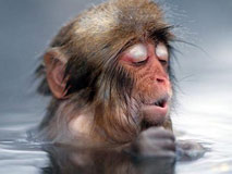日本猴子泡温泉:乐在享受