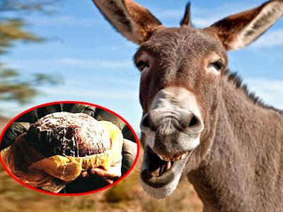 驴肚子里滚出腥臭肉球 路人叫价17万竞买