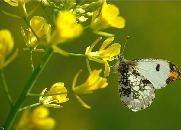 昆虫绘步骤图解