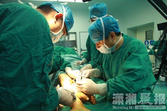 """断手""""种""""小腿湘雅寄养回植手术再获成功。 当晚,湘雅医院手显微外科团队近10名医护人员兵分三路,连夜紧急为周先生做了手术。第一组负责肢体近端清创、VSD覆盖创面,第二组负责断肢清创,第三组负责受区准备与断肢寄养再植。周先生的断手很快就恢复了血运。 """"这种撕脱性离断要复杂得多,不是像刀砍伤那样'一刀切'的简单平面,只需要对接回去就行。从患者的手背,到左前臂,一直到肘部,都有大面积的皮肤软组织缺损和血管、神经、肌腱、骨关节撕脱损伤的平面都不一致,修"""