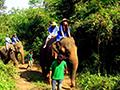大象发狂刺死驯象师 驮3名游客跑入丛林