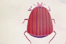 我们该吃虫子吗?