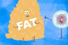 什么是脂肪?