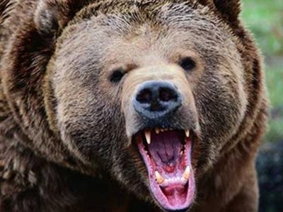 黑熊进村咬狼狗 掏空只剩四条腿