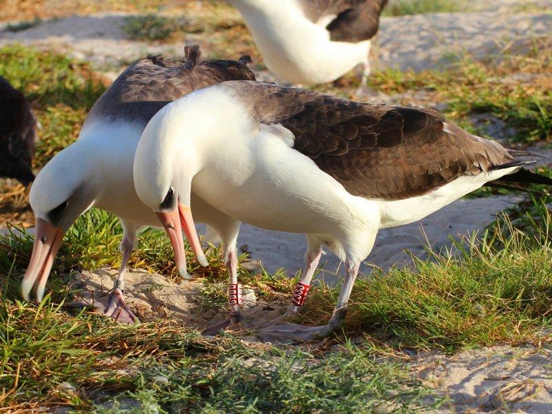 它可能是世界上年纪最大的鸟