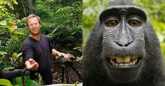 一只雌性猕猴(是的,它是雌性)拿着照相机摆弄一番,无意间出发了快门