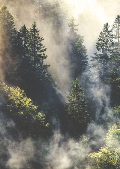 黑森林又称条顿森林,是德国最大的森林山脉,位于德国西南部的巴登-符