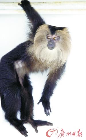 国家二级保护动物猕猴等品种