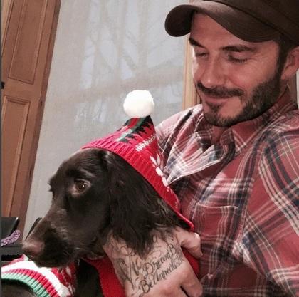 [明星爆料]活得不如狗!贝克汉姆每月花6千为爱犬美容
