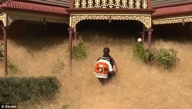 一觉醒来,房子被草淹了_资讯频道_凤凰网